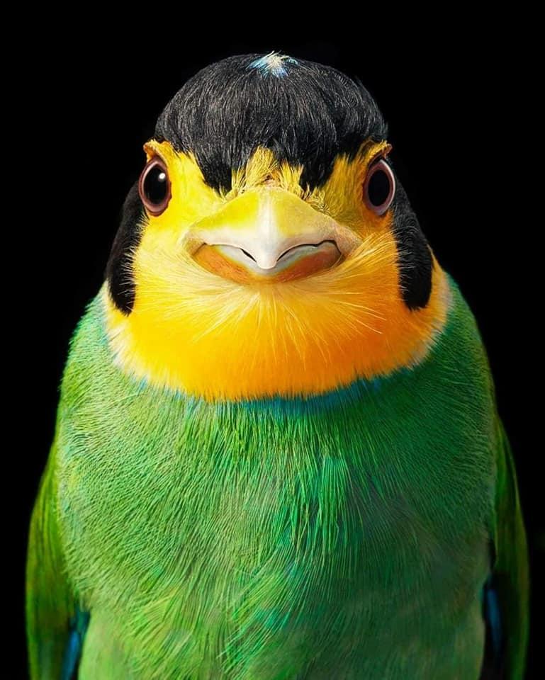 صور مذهلة للطيور النادرة والمهددة